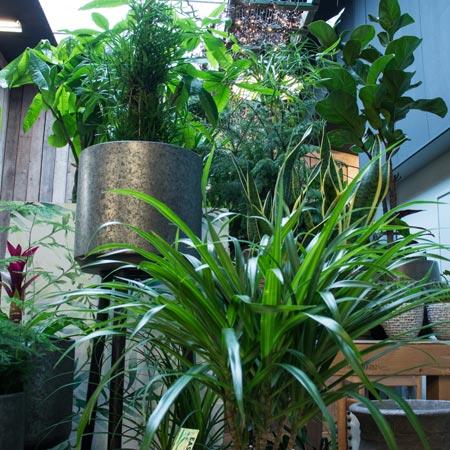 Grote Groene Plant.Plantverrassing Grote Groene Plant